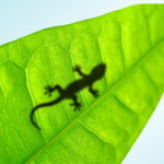 Animals_Reptiles_Small_lizard_on_a_leaf_024963_-150x150 Шрифт Helvetica – фильм