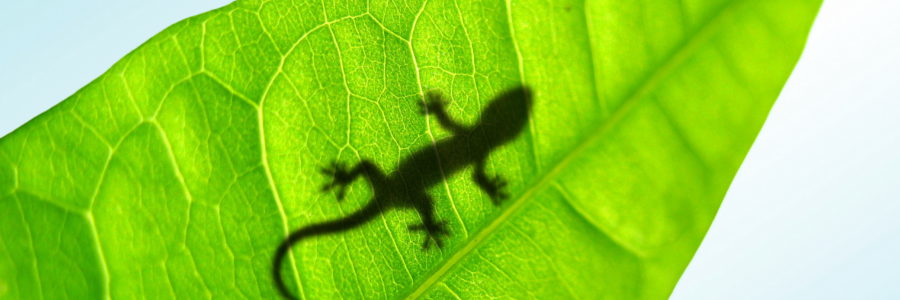 Animals_Reptiles_Small_lizard_on_a_leaf_024963_